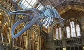 Musei gratis a Londra