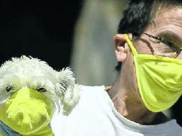 Rapporto tra Covid e Animali domestici